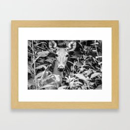 Peeper Framed Art Print