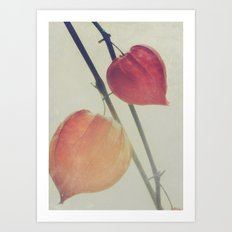 Autumn Botanical, Chinese Lantern - Physalis alkekengi Art Print