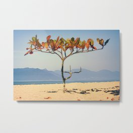 Brazilian Beach Tree Metal Print