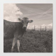 vintage cow Canvas Print