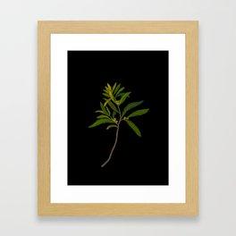 Ilex Angustifolia Mary Delany Vintage Floral Collage Botanical Flowers Black Background Framed Art Print