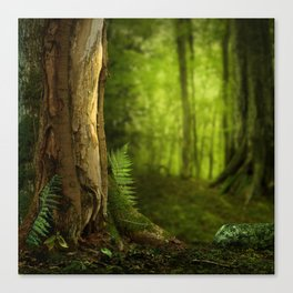 Ferns and tree in Celtic Forest Canvas Print