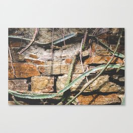 Cactuswall Canvas Print