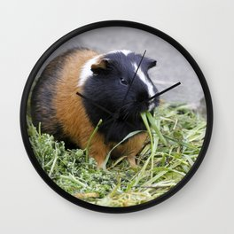 Lovely Guinea Pig Wall Clock