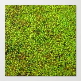 moss green II Canvas Print