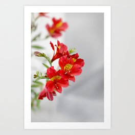 Red Flowers Art Print
