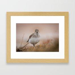 Alpi Framed Art Print