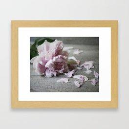 Peony Falling Framed Art Print