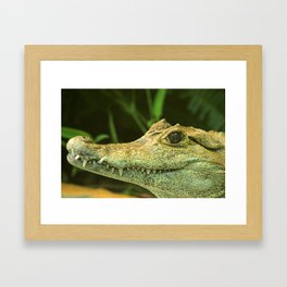 Caiman Framed Art Print