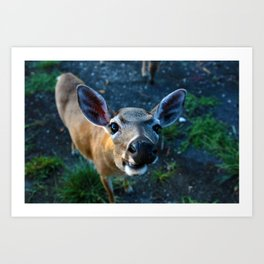 Key Deer Art Print