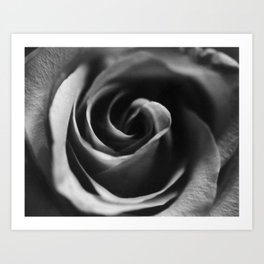 Rose in Shadow Art Print