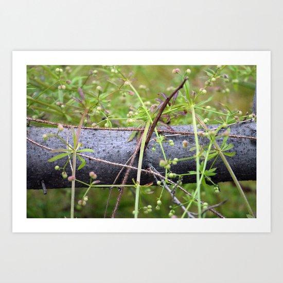 Overgrown branch Art Print