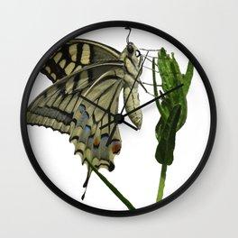 Scarce Swallowtail Wall Clock