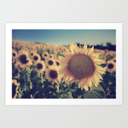 """Sunflowers"" Vintage dreams Art Print"