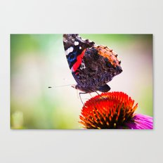 out on top Canvas Print