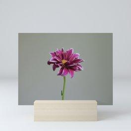 Magenta Gerbera Daisy | Flower Mini Art Print
