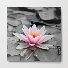 Pink Lotus Flower Waterlily Metal Print