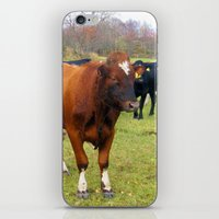 cows iPhone & iPod Skins featuring Cows by AstridJN