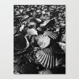 Shell-shocked Canvas Print