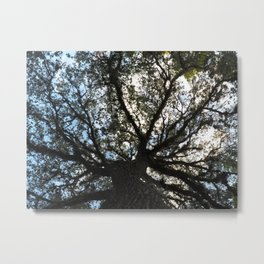 Speading Oak Metal Print