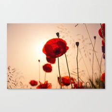 Poppy flower in the sun Canvas Print