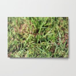 The Drifting Dragonfly Metal Print