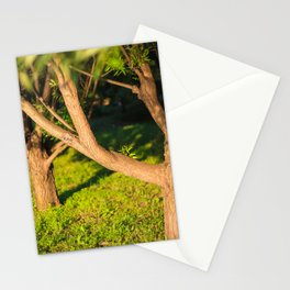 Beautiful sunlight, sunset, tree alley Stationery Cards