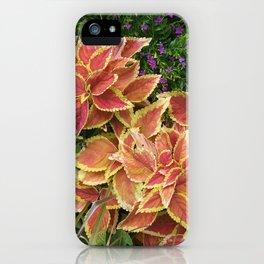 Orange Coleus iPhone Case