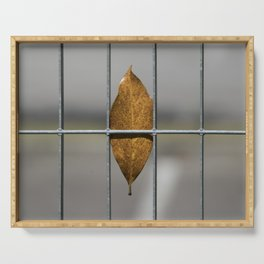autumn leaf on gate background Serving Tray