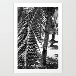 Palm Tree on Beach in Black and White Art Print