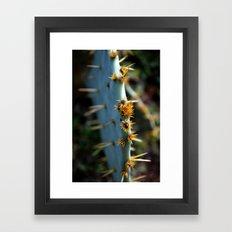a south Texas cactus.  Framed Art Print