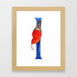 I is for I'iwi Framed Art Print
