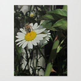 Daisy and Friend Canvas Print