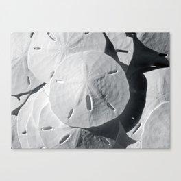 Sea Cookies Canvas Print