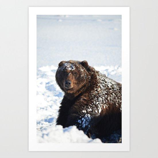 Alaskan Grizzly in Snow Art Print