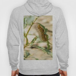Buff Ermine Moth Caterpillar Hoody