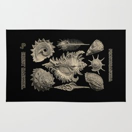 """Prosobranchia"" from ""Art Forms of Nature"" by Ernst Haeckel Rug"