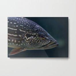 TheFish Metal Print