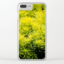 Taxus baccata Yew new shoots Clear iPhone Case