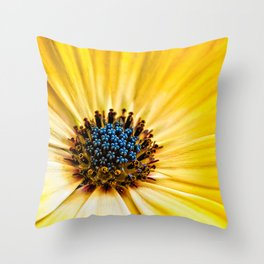 Osteospermum-'Buttermilk' Throw Pillow