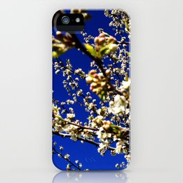 Spring Blossom Sky iPhone Case