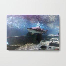A shark swimming near a wreck Metal Print