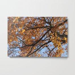 Autumn Raes Metal Print