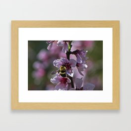 Spring Bee Framed Art Print