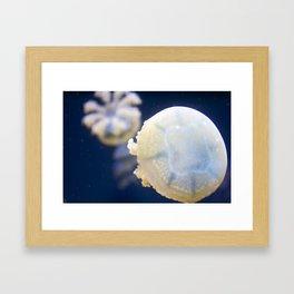 jellies Framed Art Print