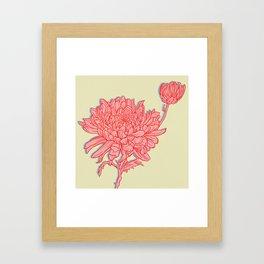 Chrysanthemum in Pink Framed Art Print