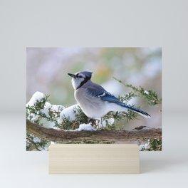 Look Skyward Blue Jay Mini Art Print