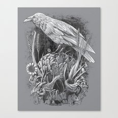 White Raven Canvas Print