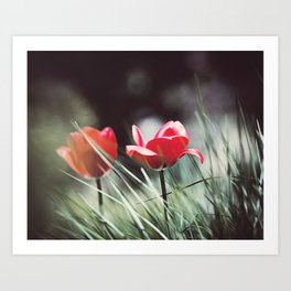 Red Tulip Flower Photography, Floral Green Grass, Red Nature Botanical Art Art Print