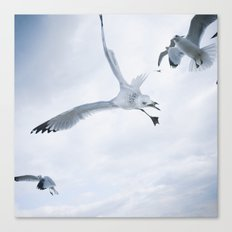 Seagull {Two} Canvas Print